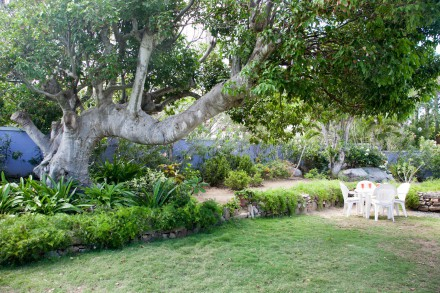 The garden features tropical plantings and numerous shady trees.