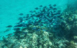 Snorkeling in Virgin Gorda